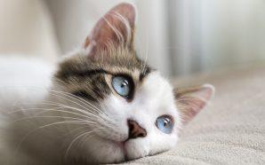 Dlaczego warto zaopiekować się kotem?