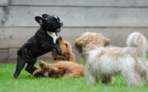 Na co warto zwrócić uwagę wybierając karmę dla psa lub…