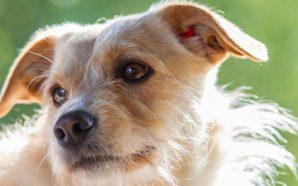 Jakich błędów nie popełniać karmiąc psa