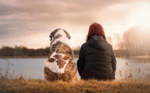 Jak przygotować psa na przełom nowego roku?